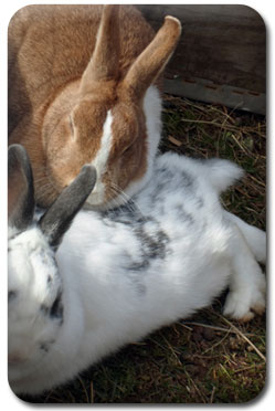 Daphne the Rabbit
